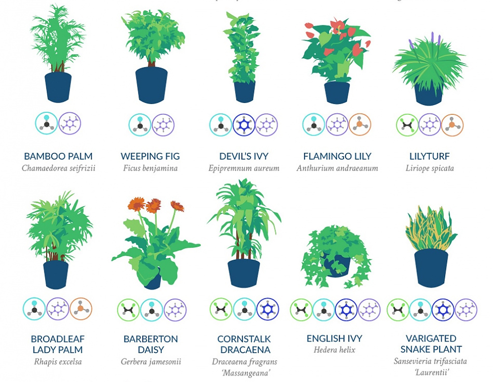 Infographic: The NASA Guide to Air-Filtering Plants | RECOIL ... on army study, sally ride study, facebook study,