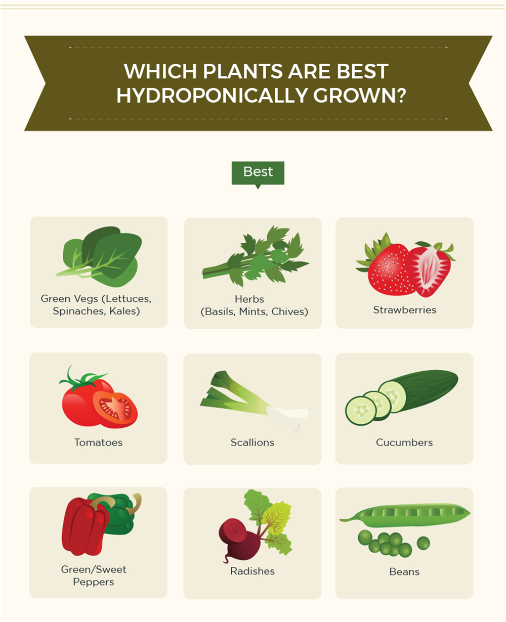 Infographic hydroponic gardening fruit vegetable grow 9