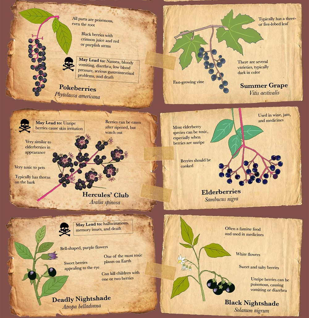 Infographic poisonous berries food fruit vegetable garden forage 3