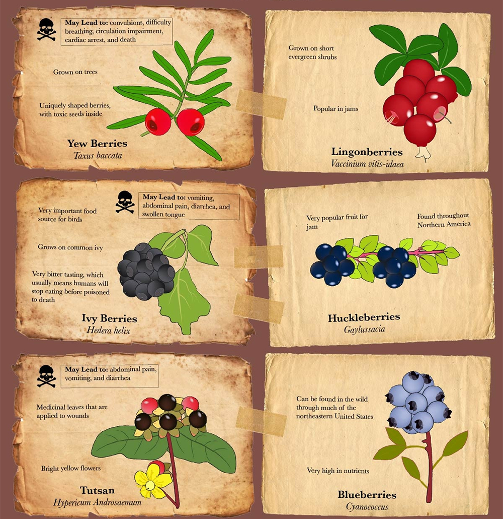 Infographic poisonous berries food fruit vegetable garden forage 5