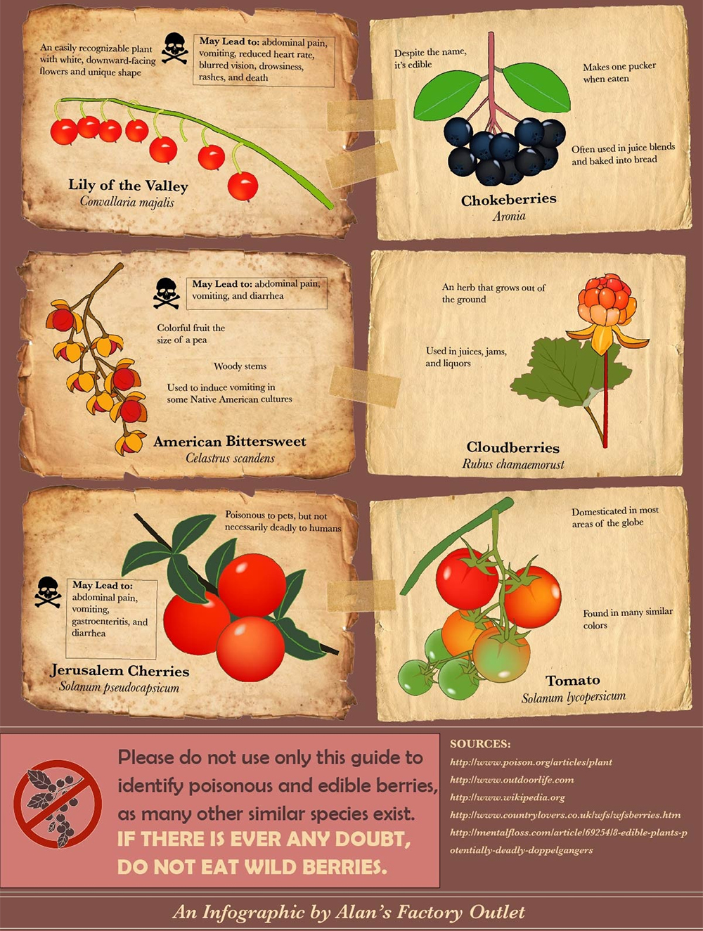 Infographic poisonous berries food fruit vegetable garden forage 6